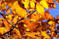 stimeo - jesien